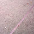 Morgenroth, Spezialbeläge, lose, Verlegung, Aufrollen, Einlagerung, Abkleben, Belagkanten, Schutzbeläge, Hallenboden, Schutzbeläge, Transport, Belagrollis, rückstandsfrei, Klebeband, Abrollgerät, Belagkanten, einfach, Preisliste